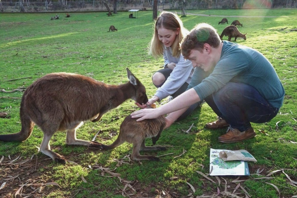 Birthday Pie - feeding kangaroos